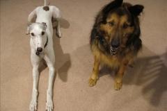 tn_480_boarding_dogs_985-jpg