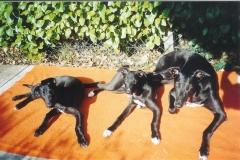 tn_480_shadow_and_pups_001-jpg